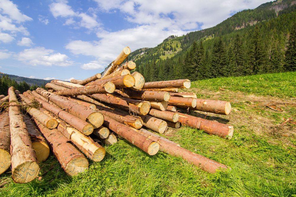 Neben den Zertifizierungskriterien für forstwirtschaftliche Betriebe gibt es auch solche für Holzprodukte. (Bild: Marcin Krzyzak / Shutterstock.com)