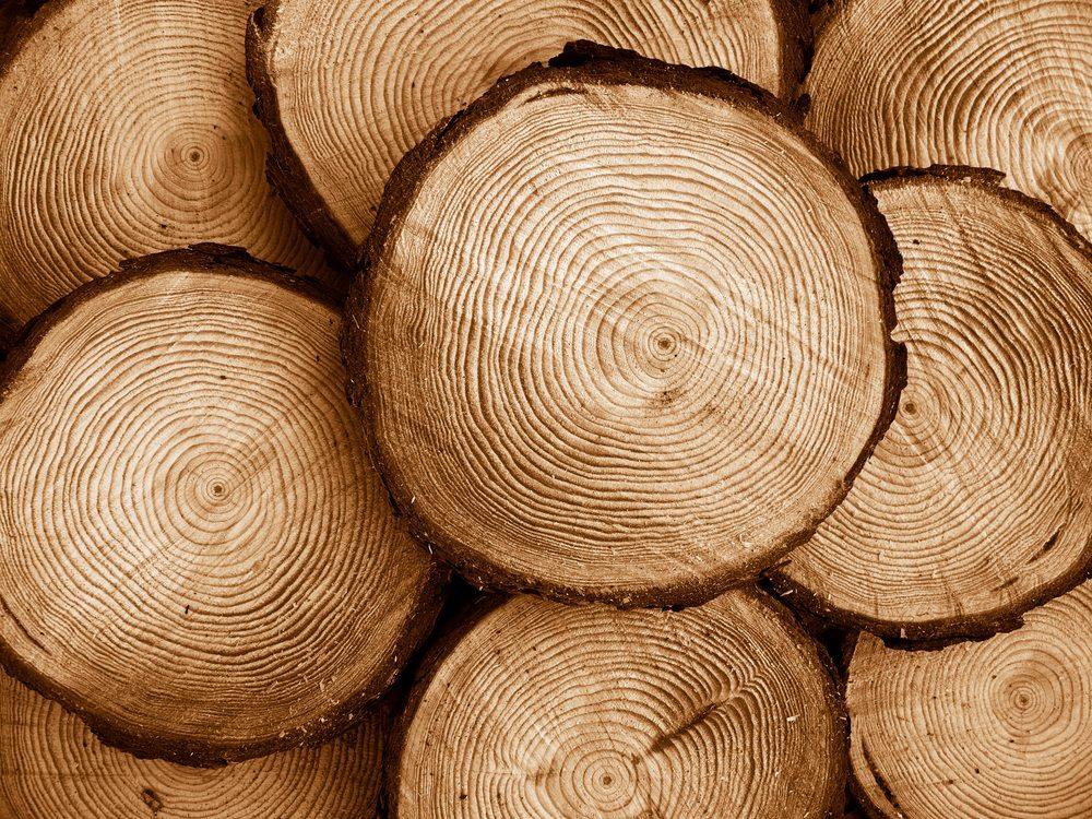 Kiefer – wichtiges Holz für Möbelstücke und Innenausbau. (Bild: luri / Shutterstock.com)