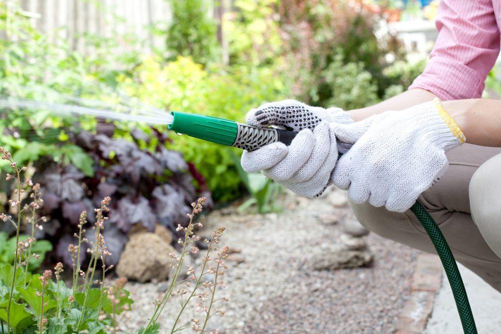 Experten empfehlen, die Küchenkräuter stets morgens zu giessen. (Bild: djem / Shutterstock.com)