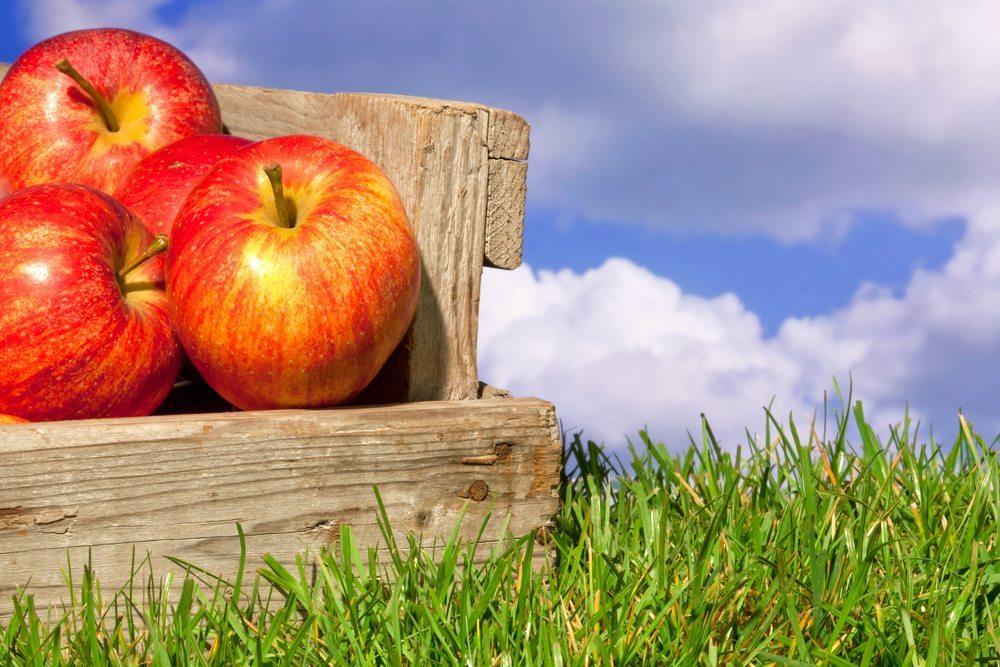 Unterschiedliche Varianten, die das Obst trennen sind ein besonders schicker Blickfang. (Bild: RTimages / Shutterstock.com)