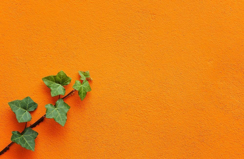 Vertikale Gärten sind sowohl aussen als auch innen ein sehr schöner Hingucker. (Bild: Cousin_Avi / Shutterstock.com)