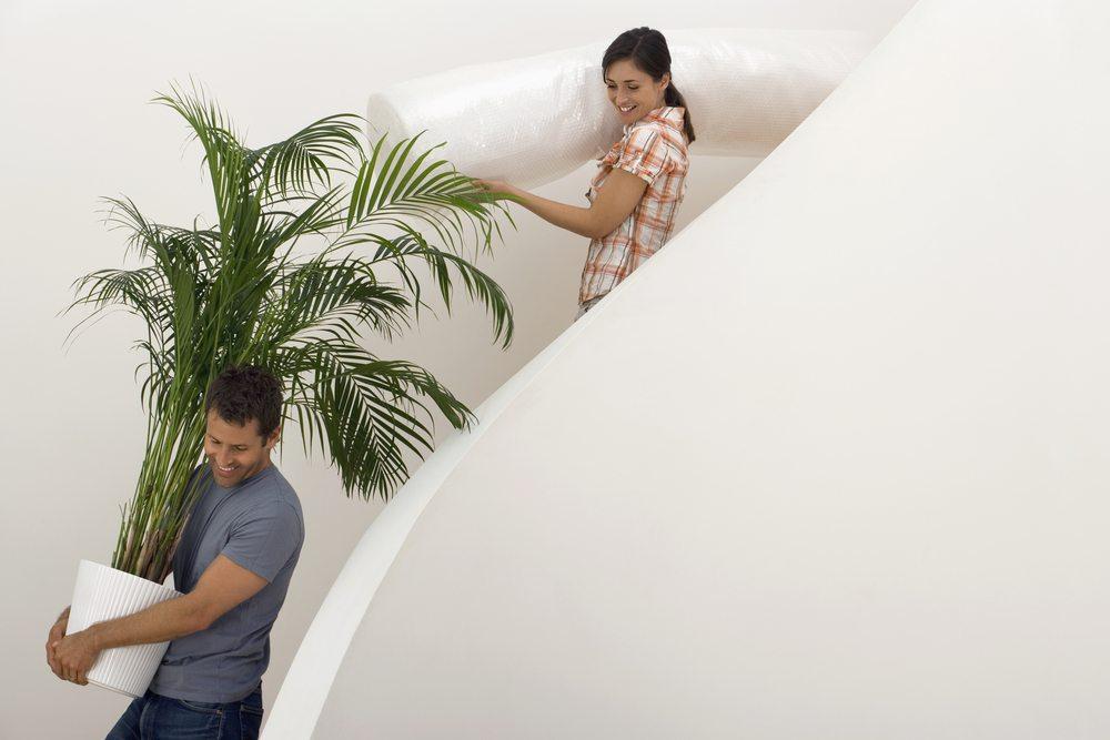 So überstehen Zimmerpflanzen Ihren Umzug Ohne Probleme ... Probleme Mit Den Pflanzen