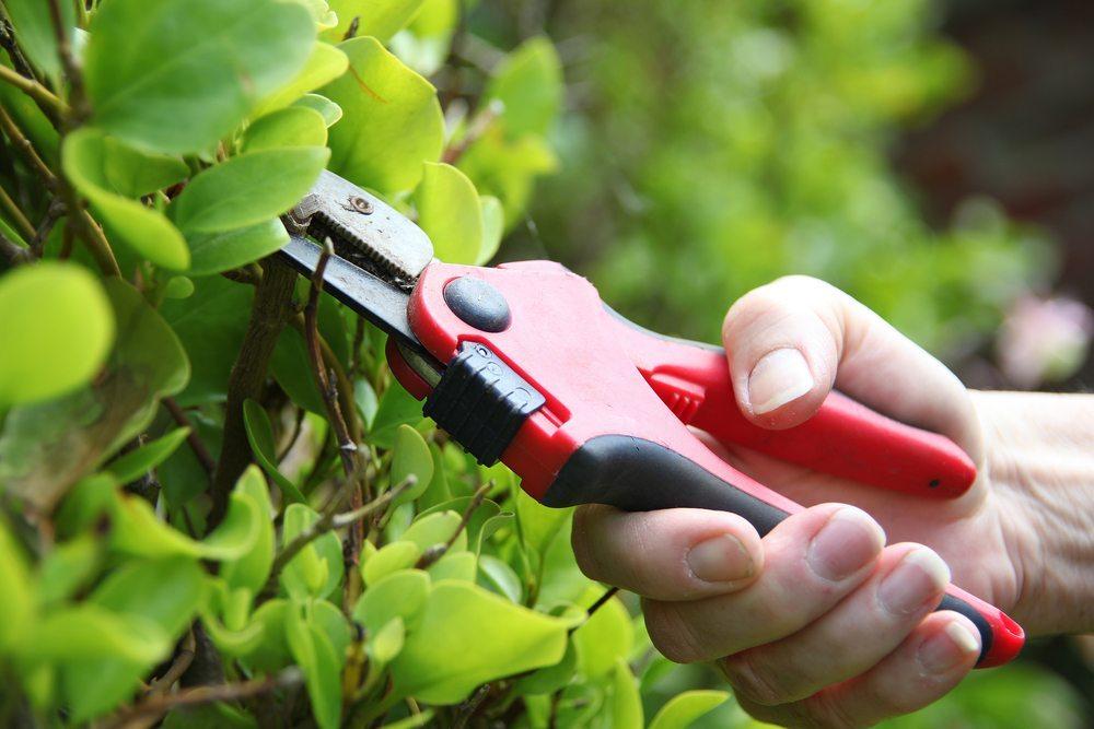 Gartenscheren existieren in mehreren Varianten, Formen und Funktionsweisen. (Bild: Lisa Strachan / Shutterstock.com)