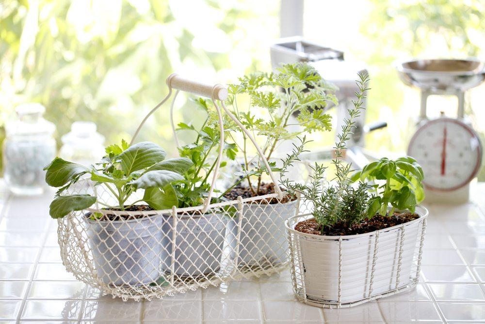 Wer gern kocht, schwört auf den eigenen Kräutergarten auf der Fensterbank. (Bild: kazoka / Shutterstock.com)