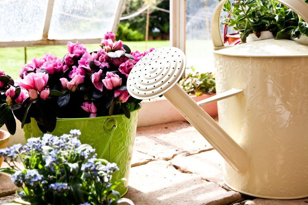 Die Zimmerpflanzen sollten mit Vorsicht gegossen werden. (Bild: PerseoMedusa / Shutterstock.com)