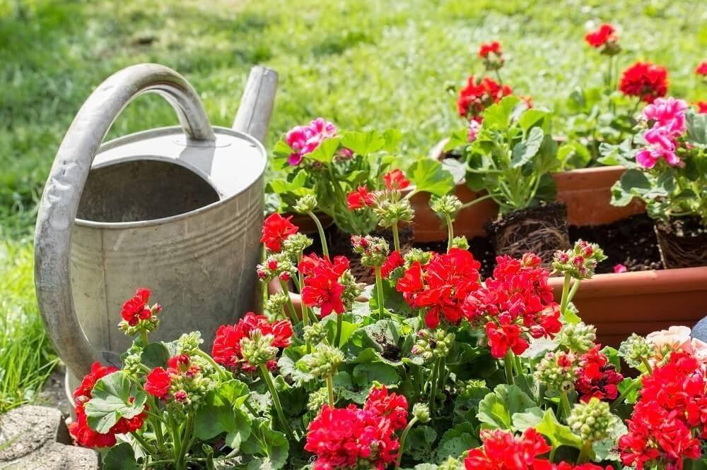 Experten raten dazu, lieber häufiger nur wenig zu giessen. (Bild: © tibanna79 - fotolia.com)