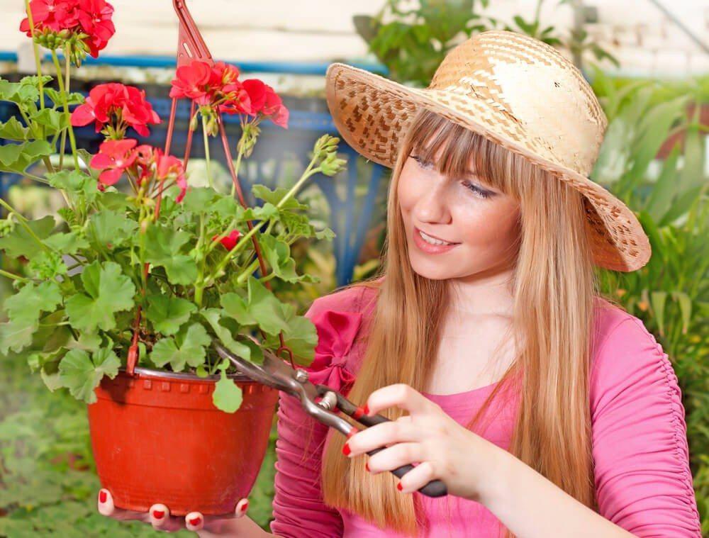 Die verwelkten Blütenstängel sollten Sie regelmässig entfernen. (Bild: © Suzana Marinkovic - shutterstock.com)