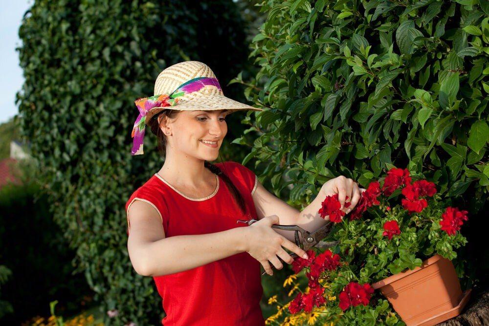 Können Sie sich längere Zeit nicht um Ihre Blütenpracht kümmern, raten Experten zu einem radikalen Rückschnitt. (Bild: © Frantisek Czanner - shutterstock.com)