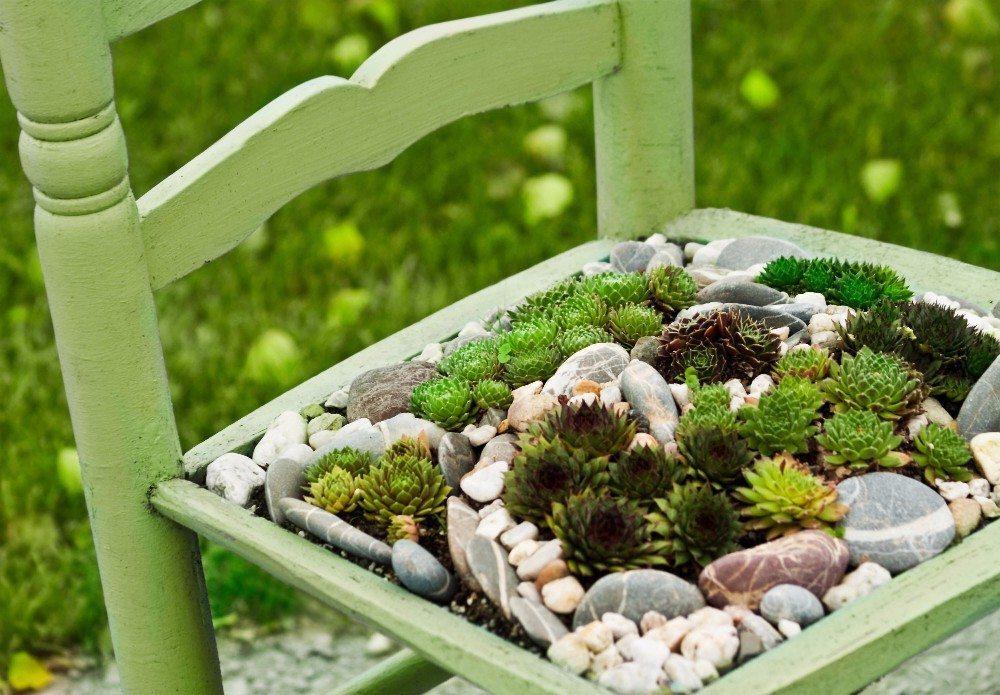 In den Sommermonaten fühlen sich Ihre Kakteen draussen auf der Terrasse wohl. (Bild: © Pixelot - fotolia.com)