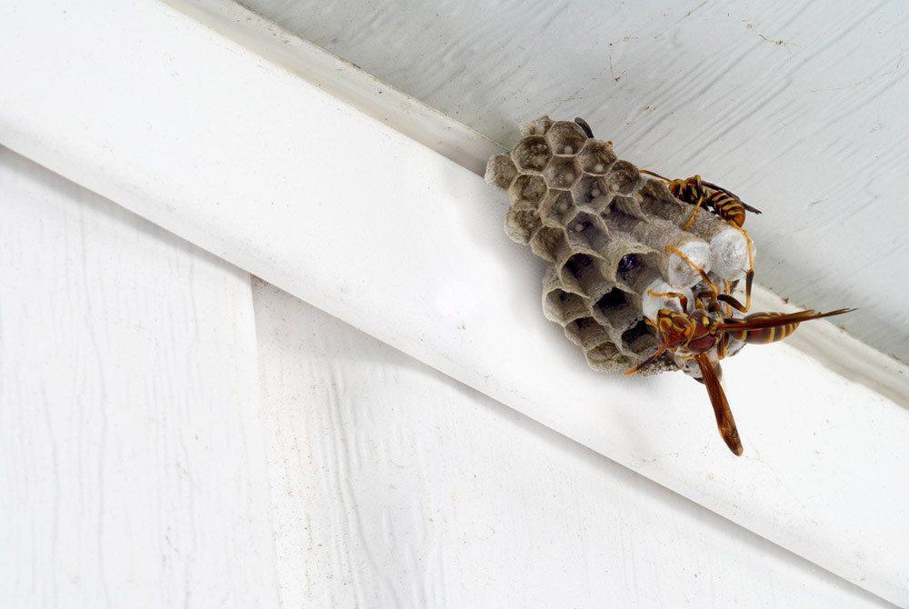 Man sollte sorgsam mit Hummeln und Wespen als Bestäuber umgehen. (Bild: Rob Byron – shutterstock.com)