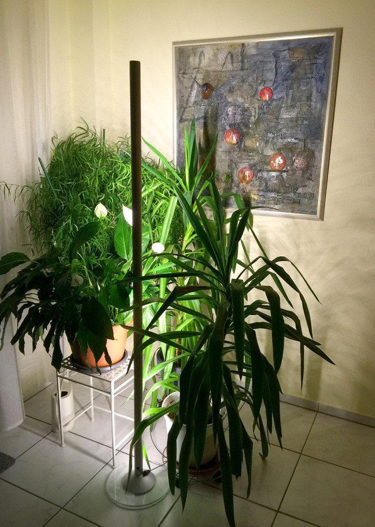 Ein Zimmer ohne Pflanzen wirkt leblos und kalt. STAN beleuchtet die Pflanzen auf seine sehr flexible Weise. (Bild: © aristob.com)