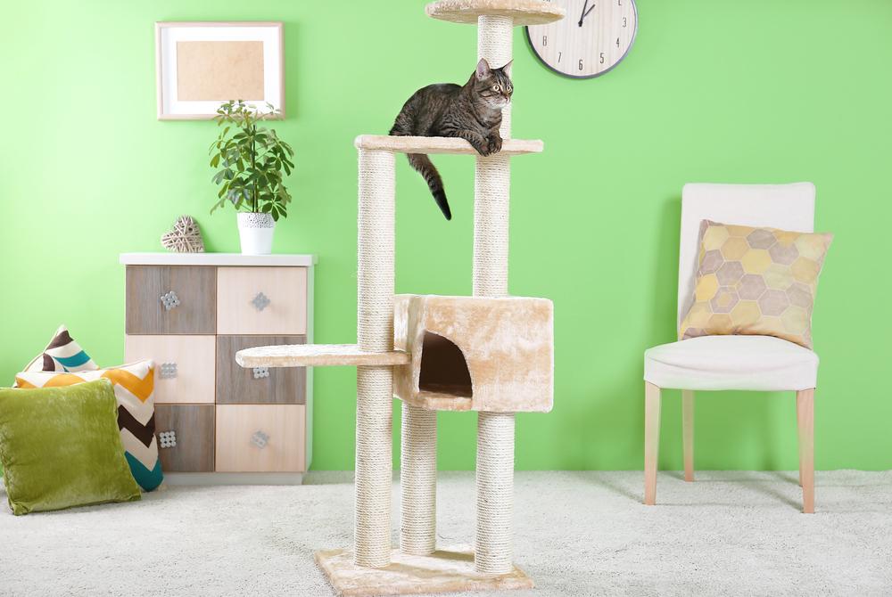 Ein kleines Paradies für die Katze herrichten (Bild: Africa Studio - shutterstock.com)