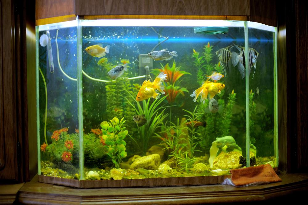 Ein Aquarium zieht die Blicke auf sich. (Bild: Andrei Zveaghintev - shutterstock.com)