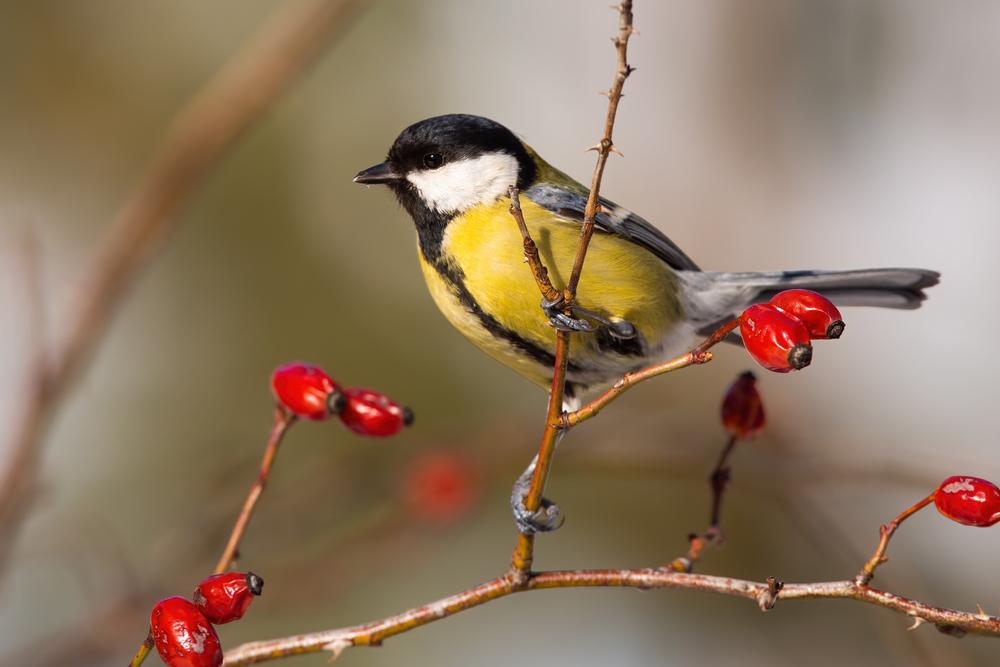 Den Vögeln einen Gefallen tun (Bild: WildMedia - shutterstock.com)